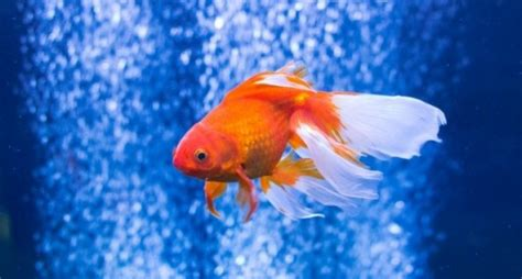 tafsir mimpi  erek erek     terkait  buku mimpi tentang melihat ikan ulasand