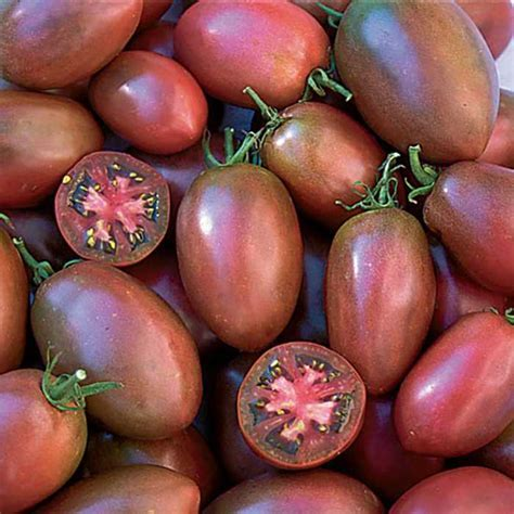 Purple Russian Tomato   Totally Tomato
