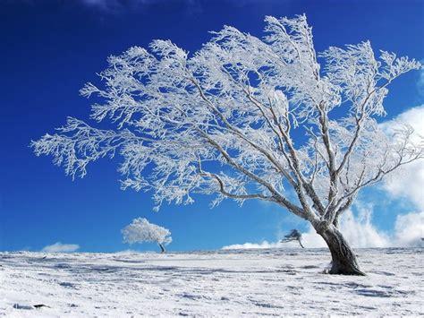 Beautiful Background Winter, Snow, Tree Hd Wallpaper