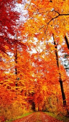 Fall Iphone Wallpaper Home Screen by Iphone Orange Fall Nature Autumn Warm Seasons Cozy Leaves