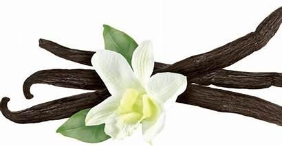 Vanilla Fruit Starts Nutrition Energy Powerbar Recipe