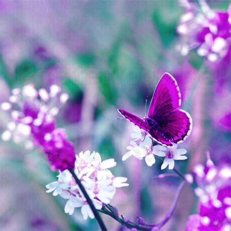 atteloi schmetterling lila poster bestellen posterlounge - Lila Wohnzimmer