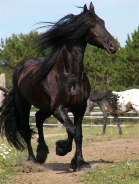 horses horse exotic friesian most