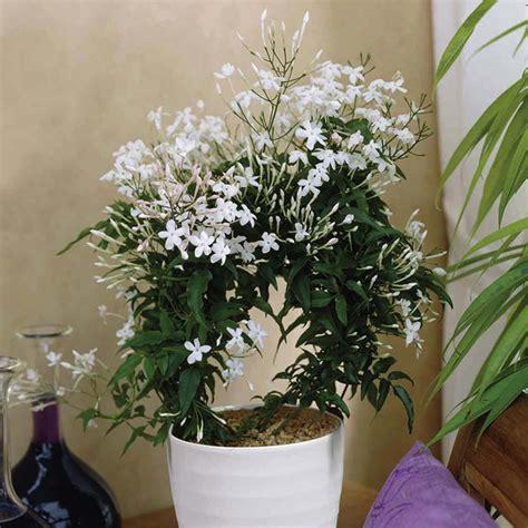 5 plantes d intérieur pour décorer la chambre à coucher et