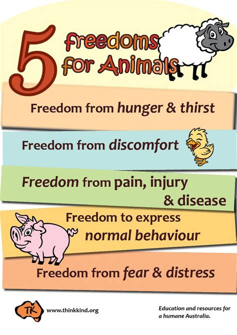 freedoms  animals poster classroom posters