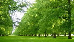 Parks In London : explore the best parks in london open space ~ Yasmunasinghe.com Haus und Dekorationen