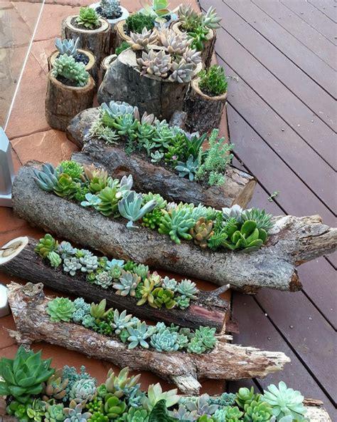 les plantes grasses d ext 233 rieur cr 233 ez un jardin exotique