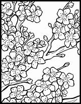 Coloring Blossom Chinese Cherry Lanterns Lantern Tree Colouring Festival Flower Adult Japanese Printable Blossoms Template Sheets Behance Letscolorit Getcolorings Mobot sketch template