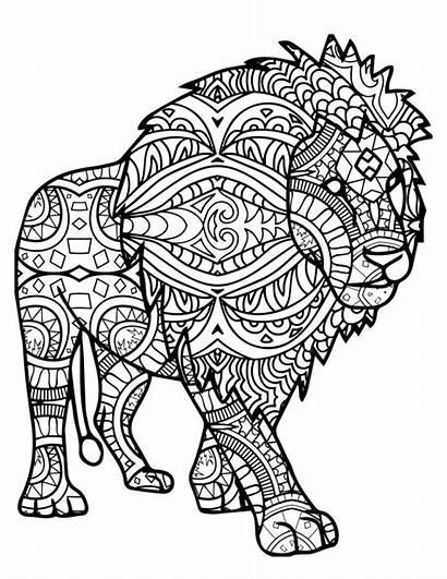 Singa Sketsa Gambar Diwarnai Untuk Belajarmewarnai