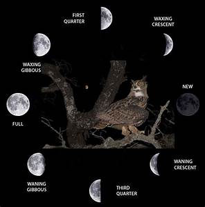 The Five Lunar Phases That Have Been Considered In The