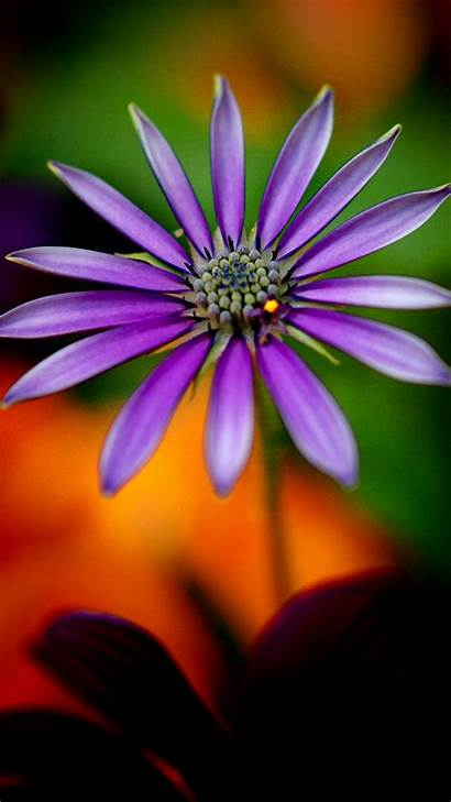 Mobile 1080p Wallpapers Flower Purple Backgrounds Android