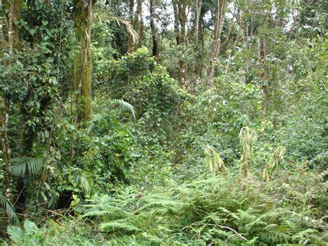 regenwald abholzung klimafolgen sind groesser als gedacht