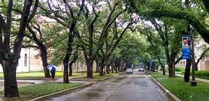Rice Campus Has A Lovely Canopy Of Oak Trees