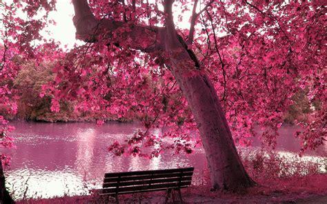 Very-amazing-free-best-free-wallpaper-spring-season - HD