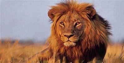 jenis fauna afrika berdasar habitatnya ilmu geografi