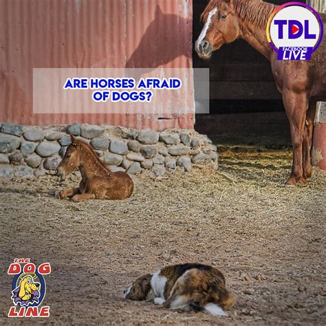 horses dog dogs afraid chasing fence