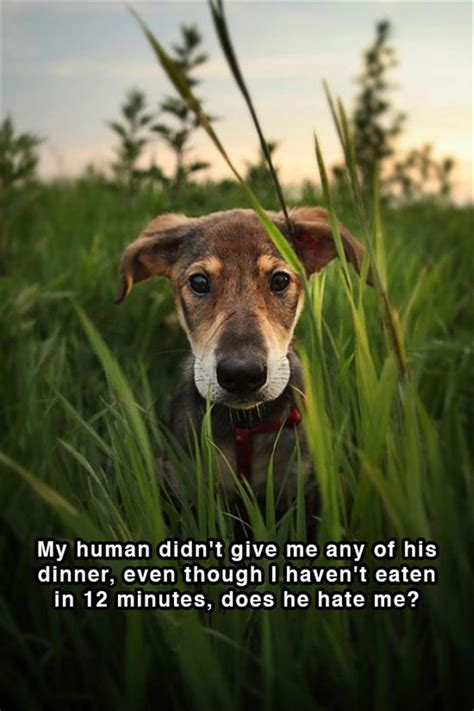 funny shower thoughts doggy edition  pics