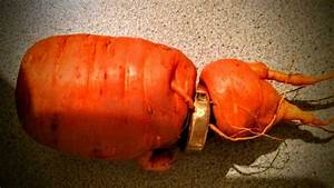 anorak man finds freshly dug carrot wearing his lost With carrot wedding ring
