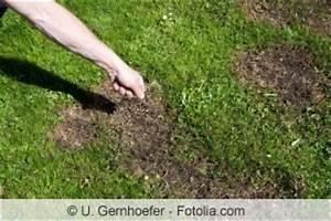Erde Für Rasen : rasen reparieren kahle stellen nachs en und ausbessern ~ Lizthompson.info Haus und Dekorationen