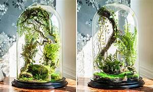 Enchanted Forest Terrarium Domes - The Green Head