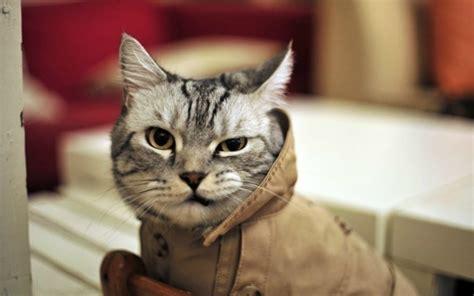 Cat Animal Wallpaper - cat humor angry animals wallpapers hd desktop and