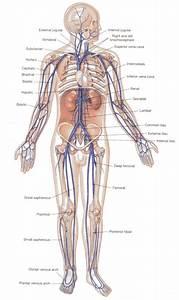 Bsc School C Level 2a Module 6 Cardiovascular Mechanics