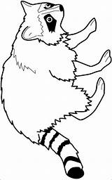 Raccoon Coloring Pages Animals Printable Forest Animal Printables Templates Clipart Crafts Drawing Cliparts Patterns Colouring Raccoons Clip Disney Wood Woodland sketch template