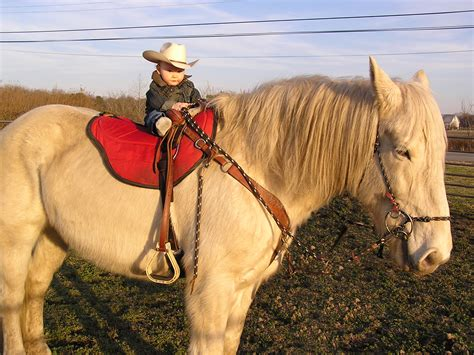 cream draft horses american boy rare horse riding without clydesdale
