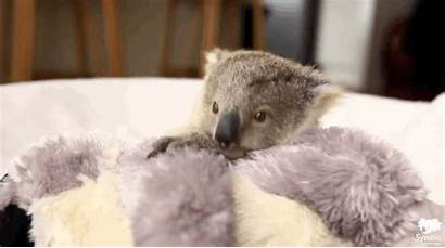 Koala Photoshoot Gifs Very Behind Adorable Birthday