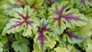 Die 10 Schnsten Schattenpflanzen Garten Diybookde