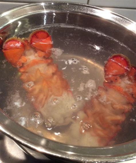 how to boil lobster tails images of up do with fish tail long hairstyles