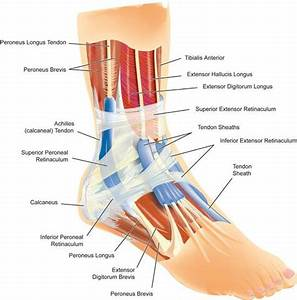 Ankle Injury Diagram