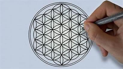 Flower Sacred Drawing Geometry Draw Tutorial Simple