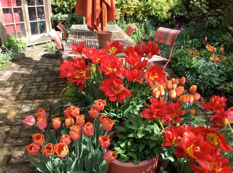 London Cottage Garden » Planting Bulbs For Next Spring
