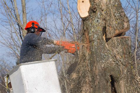tree service   reliable contractor  bryan tx