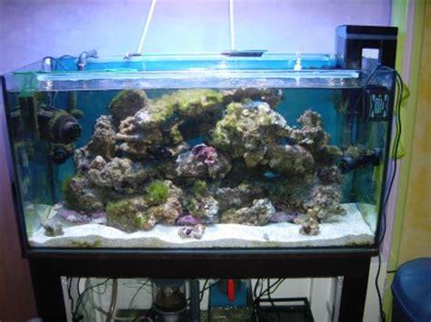 bernard l hermite aquarium nouvel habitant aquarium