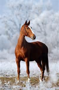 Beautiful Chestnut Horse Images