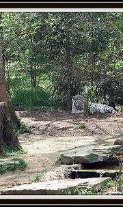 Pin on Zoo Animals