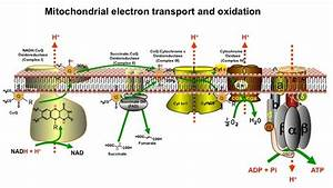Microbe Internet  Electrically Wired For Food  U0026 Energy