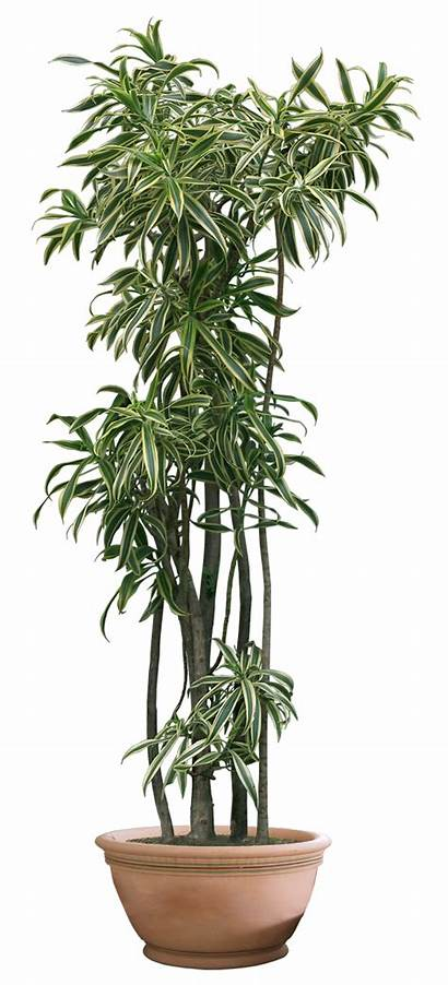 Plant Transparent Plants Clipart Background Tree Trees
