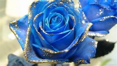 Roses Rose Glitter Gold Screensaver
