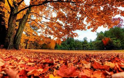 4k Leaves Autumn Background