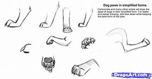 How To Draw Dog Paws  Step By Step  Pets  Animals  Free