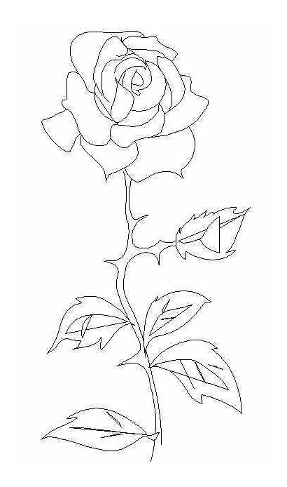 Stem Coloring Pages Flower Printable Rose Single