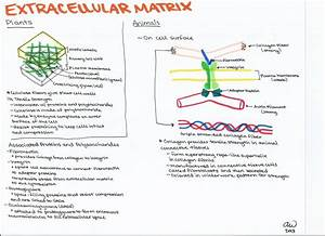 Cell Biology Study Guides