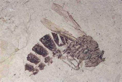 basic information florissant fossil beds national