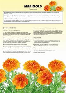 Seed Kits Flowers - Instructions