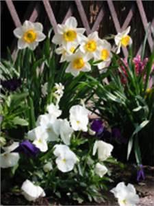 Wann Blühen Narzissen : blumenzwiebeln tulpen narzissen krokusse und andere blumenzwiebeln pflanzen ~ Eleganceandgraceweddings.com Haus und Dekorationen