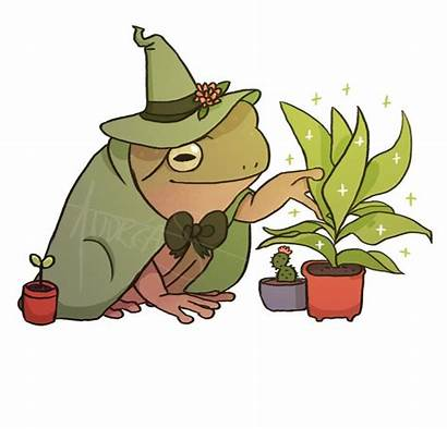 Frog Wizard Frogs Drawings Animal Indie Froggy