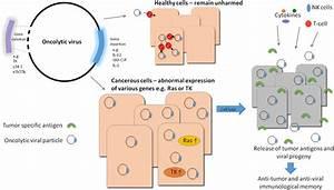 Simple Virus Cell Diagram